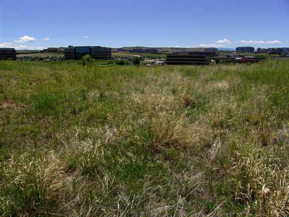 Erosion Control was achieved at Dish Network, Englewood, Colorado, using Slopetame2 and Grasspave2.