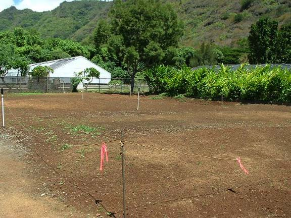 Aggregate paving was installed at Magoon Turf Demonstration & Research facilities in Honolulu, Hawaii, using Gravelpave2.