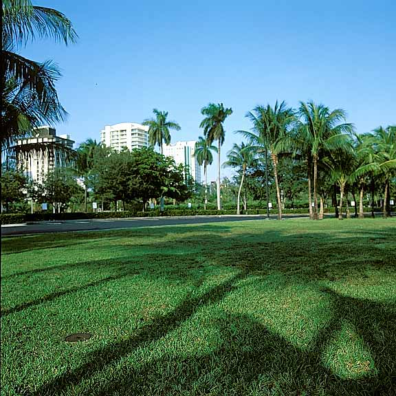 Porous Paving (formerly called grassrings) was installed on the grounds at Coconut Grove Convention Center in Miami, Florida, using Grasspave2.