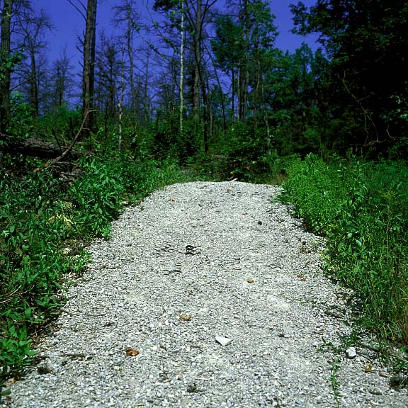 Aggregate Paving was installed on paths to prevent erosion at the Daniel Boone National Forest, Whitley City, Kentucky, using Gravelpave2.