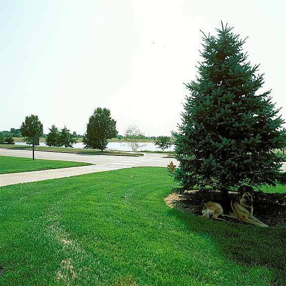 Grass pavers were installed in Bloomington, Illinois, using Grasspave2.