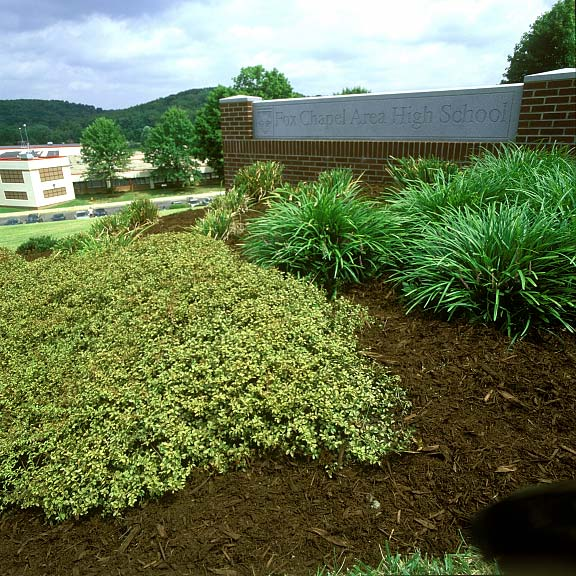 Beyond this area a Grass-Reinforcement System was installed to provide additional-event parking at Fox Chapel Area High School, Pittsburgh, Pennsylvania, using Grasspave2.
