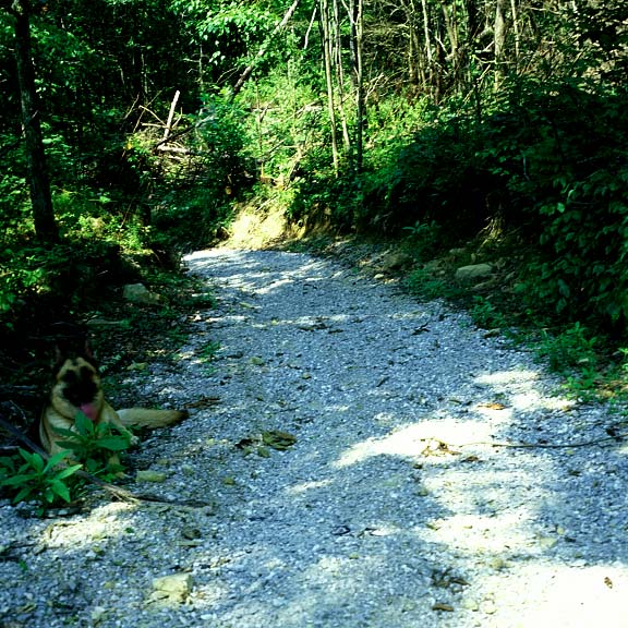 A Permeable-Erosion System was installed to prevent erosion on paths caused by flooding in the Daniel Boone National Forest, Whitley City, Kentucky, using Gravelpave2.
