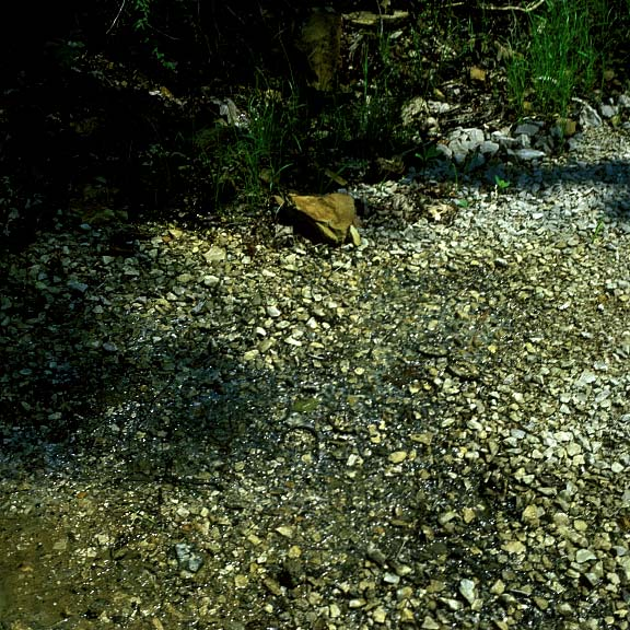 Porous Pavers were installed to help prevent erosion caused by flooding in the paths at the Daniel Boone National Forest, Whitley City, Kentucky, using Gravelpave2.