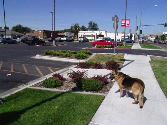 A Subsurface-Water-Retention System was installed at Walgreens Pharmacy in Caldwell, Idaho, using Rainstore3.