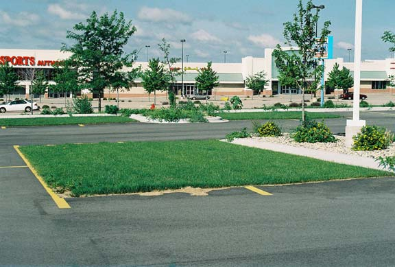 Porous Pavement was installed in the parking bays at The Sports Authority, Madison, Wisconsin, using Grasspave2.