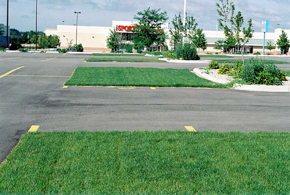 Grass Paving was installed in the parking bays at The Sports Authority, Madison, Wisconsin, using Grasspave2.