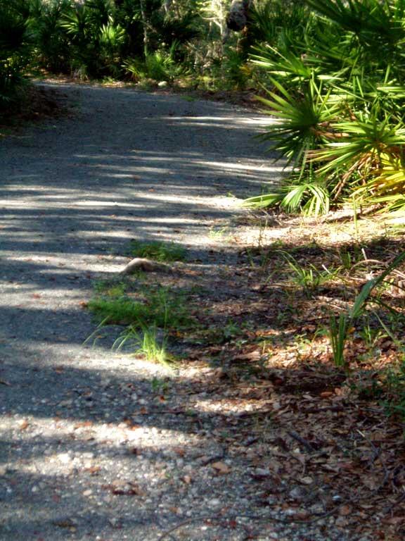 Gravel Reinforcement was installed on Jekyll Island Trail, Jekyll Island, Georgia, using Gravelpave2.