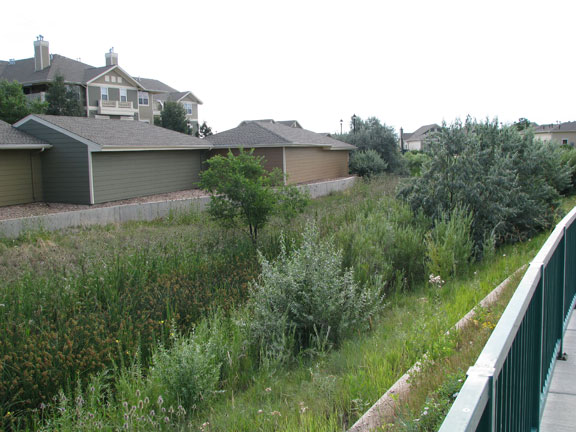 A wetland area was designed into the site to slow and filter runoff.