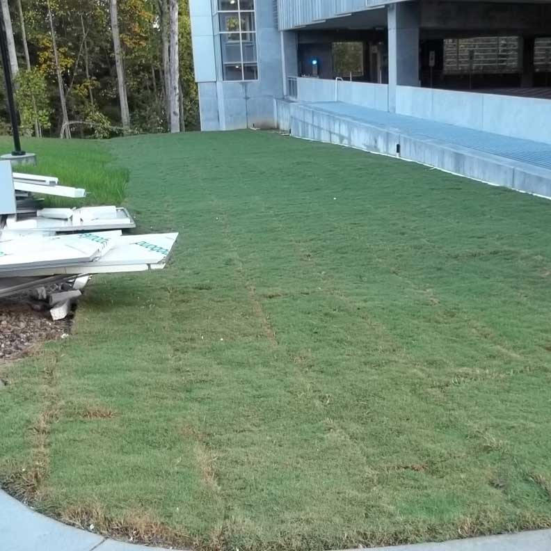 Sod is the quickest way to achieve 100% grass coverage.