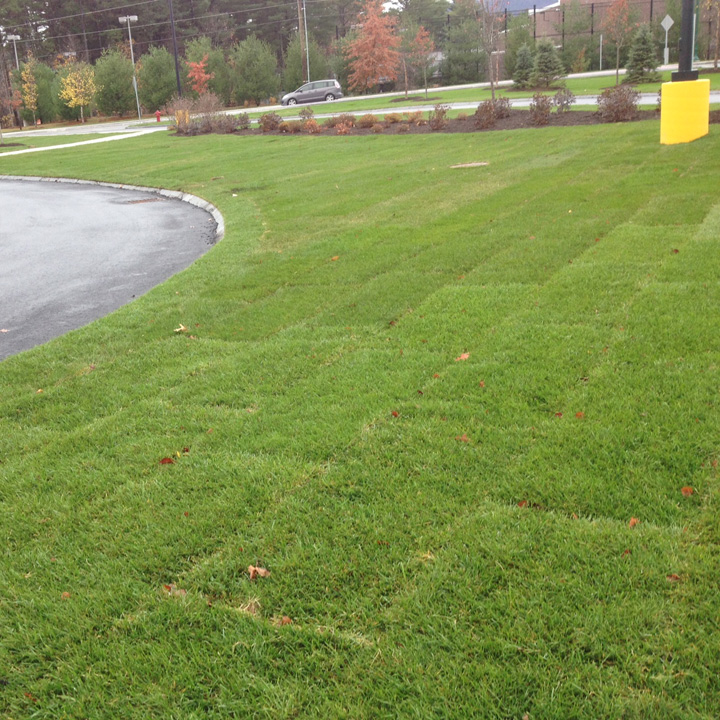 The grass parking apron area curves around the asphalt parking to almost completely surround the hard surface paving.