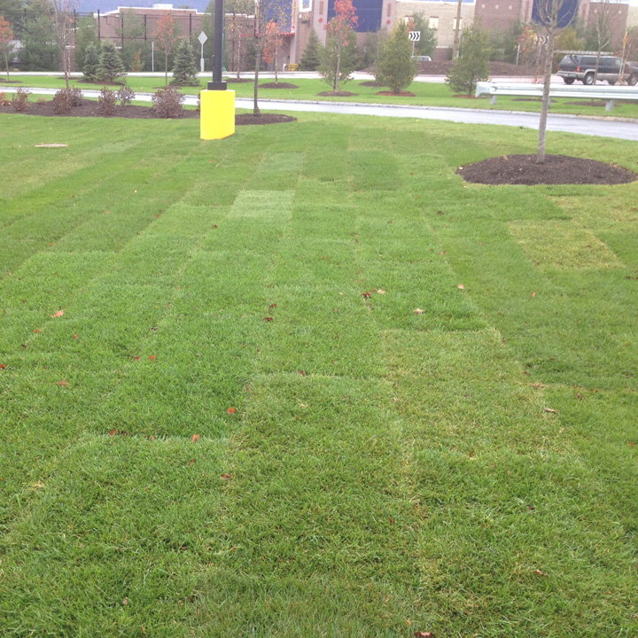 Newly placed sod rolls can be seen on the grass parking area.