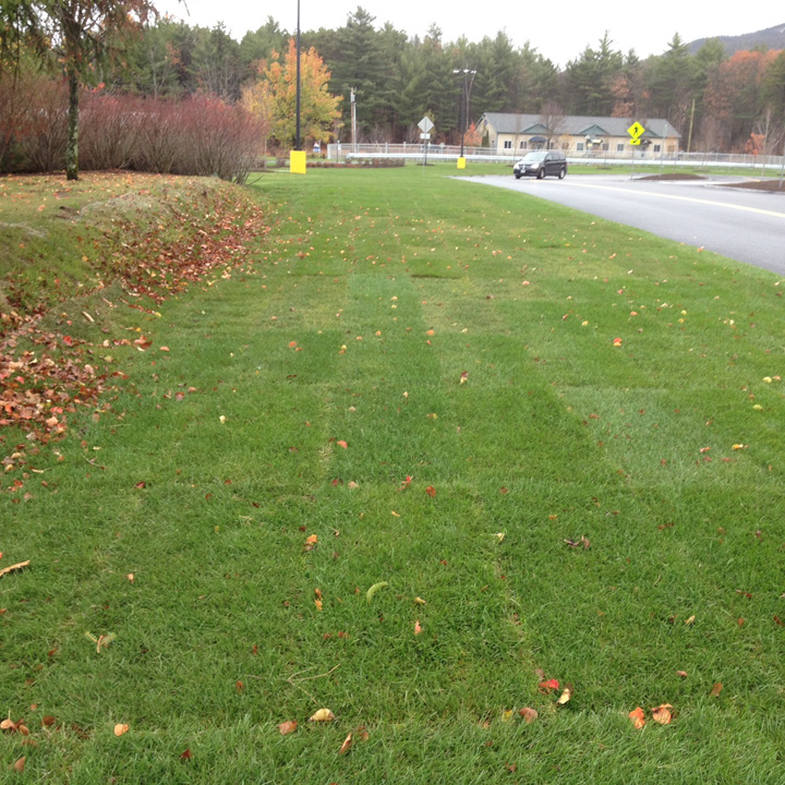Grasspave2 porous paving meets unsupported turf (left) in this photo.