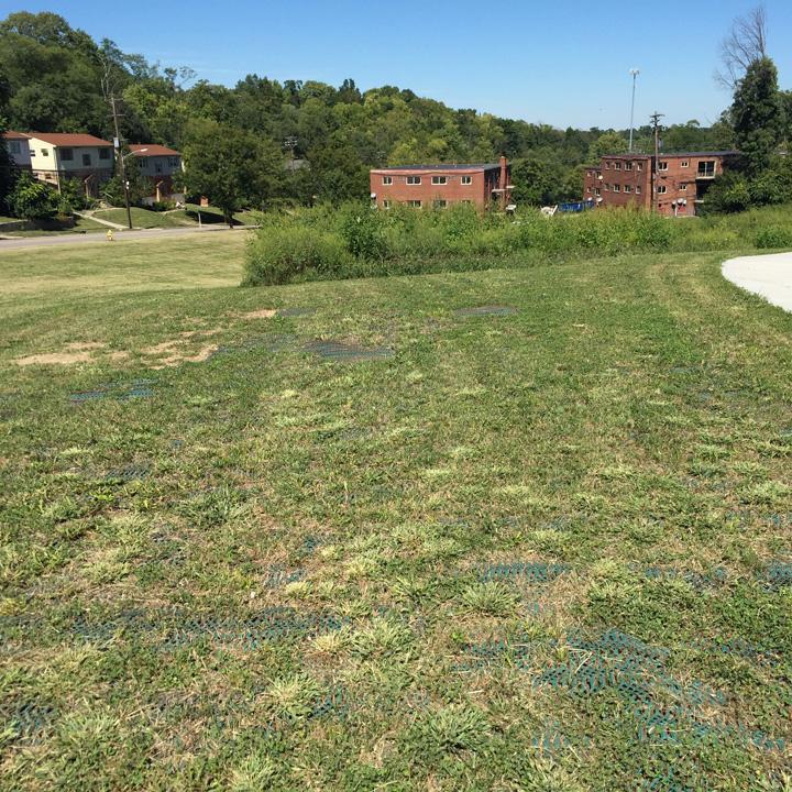 Grass has grown in through the Terratame2.