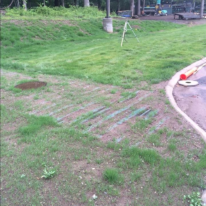 Terratame2 grass planting
