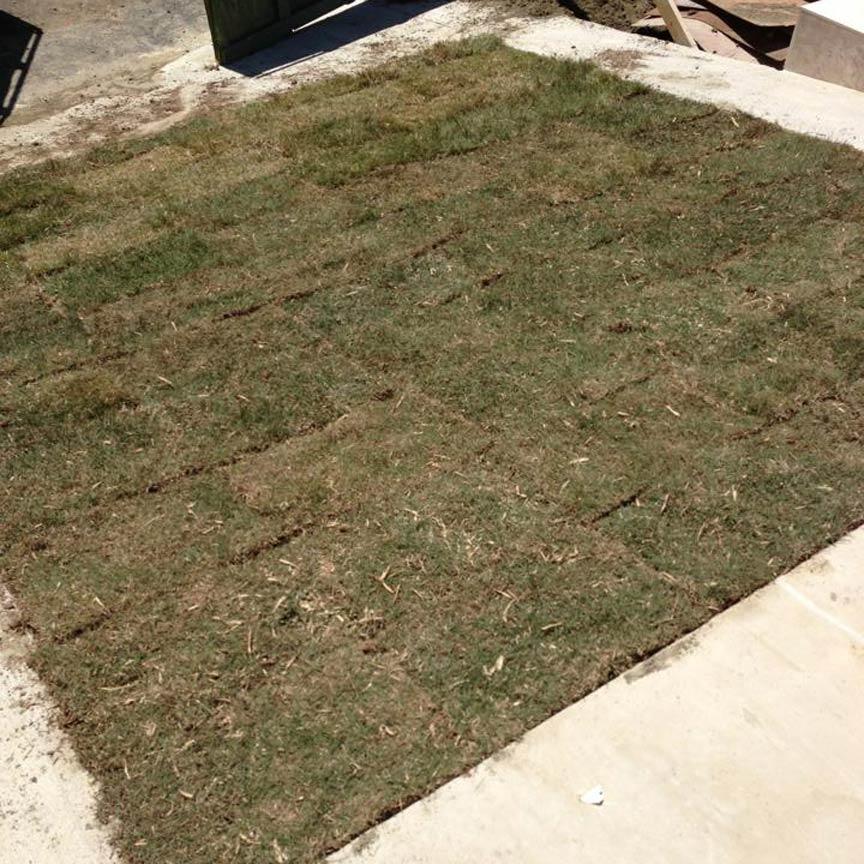 Grasspave2 - new sod